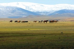 Investment of the quarter: Mongolia