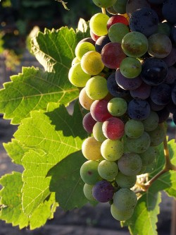 Family vineyard named US winery of the year