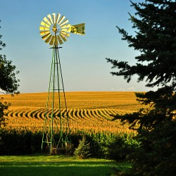 Farmland investments prove popular